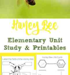 Honey Bee Unit Study + Printables - Simple Living Mama [ 1800 x 800 Pixel ]