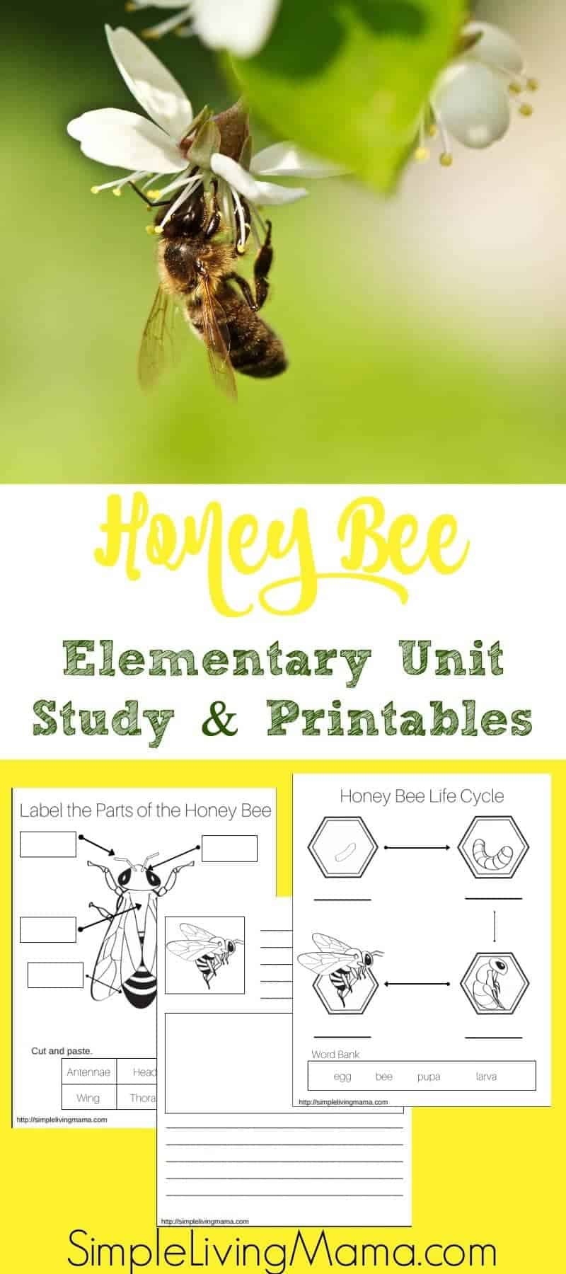 hight resolution of Honey Bee Unit Study + Printables - Simple Living Mama