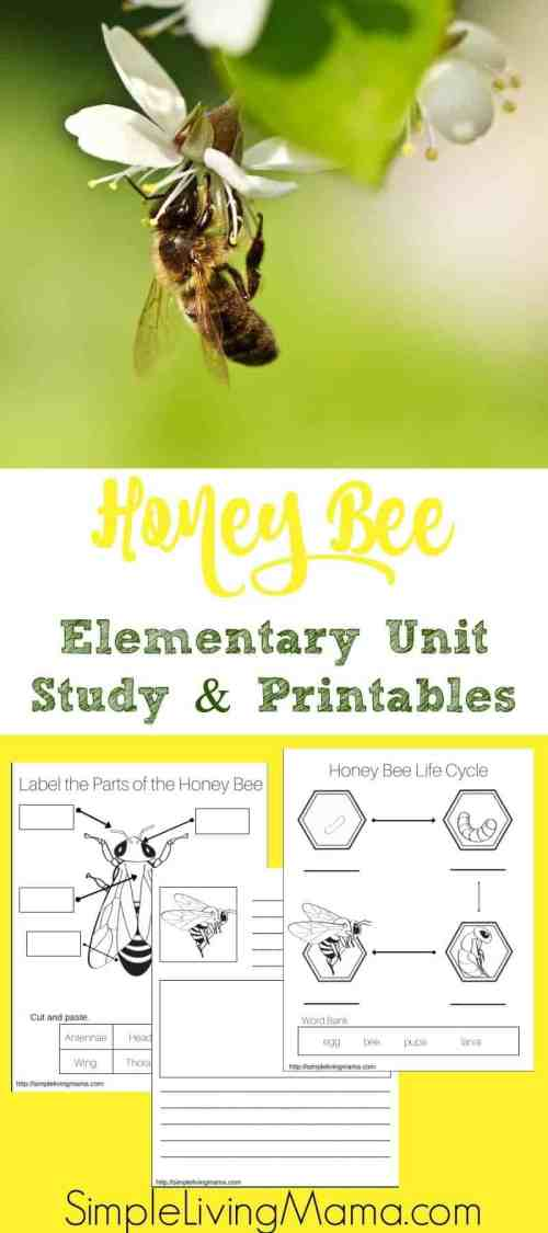 small resolution of Honey Bee Unit Study + Printables - Simple Living Mama
