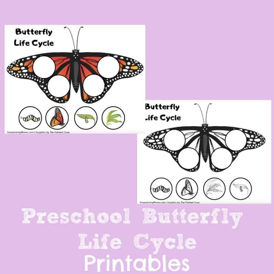 Butterfly Life Cycle Printable That Are Ambitious