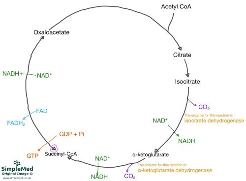 small resolution of oxygen dependent pathway