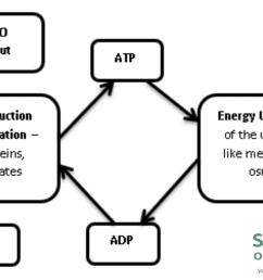 atp adp redox conversion cycle diagram [ 2000 x 1212 Pixel ]