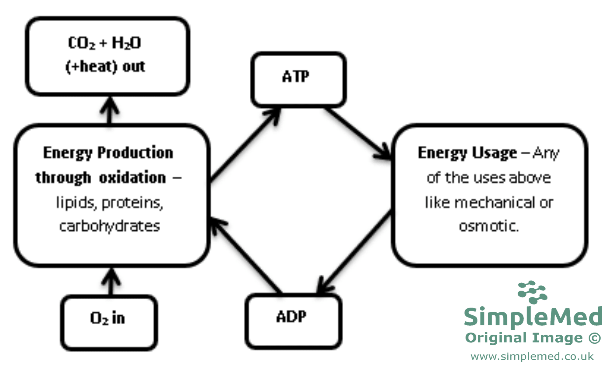 hight resolution of atp adp redox conversion cycle diagram