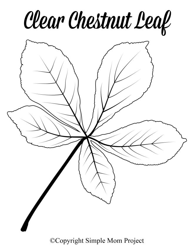 Free Printable Large Clear Chestnut Leaf Template