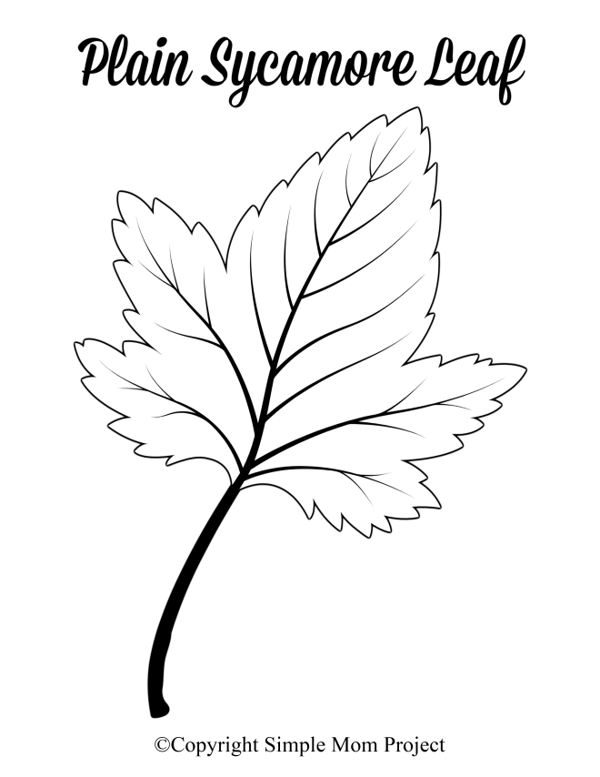 Free Printable Large Plain Sycamore Leaf Template