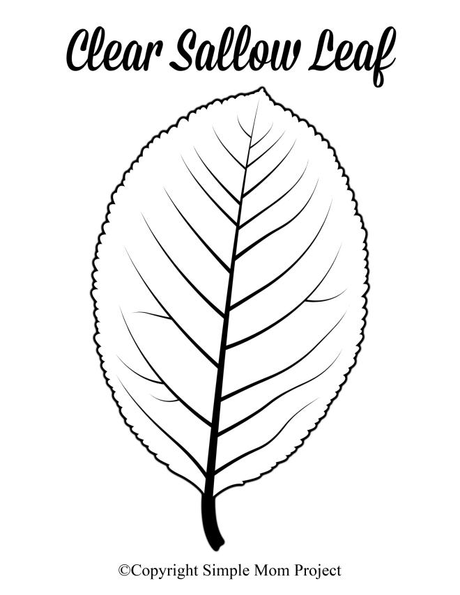 Free Printable Large Sallow Leaf Template