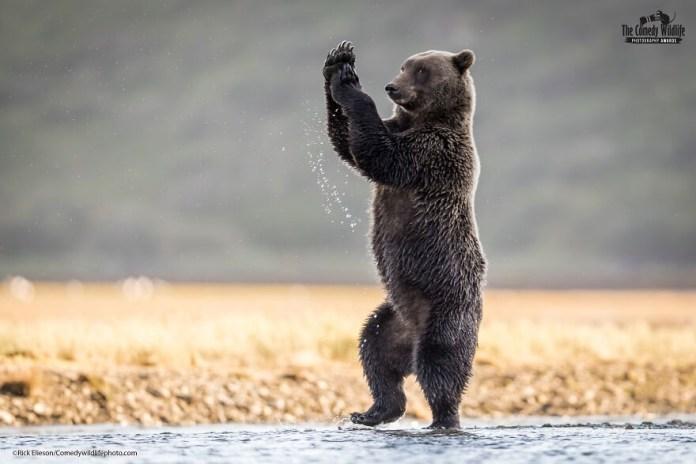Comedy Wildlife Photography Awards 2021