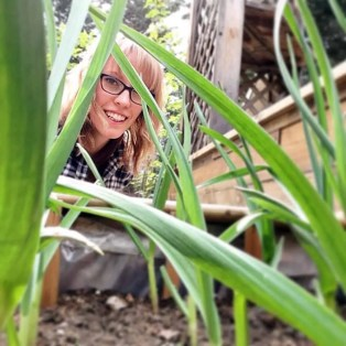 hey through garlic plants in BC