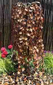 weeping elm fountain