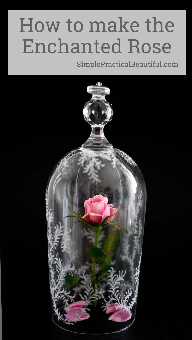 Beauty and the Beast Rose and Glass Cloche - Simple Practical Beautiful