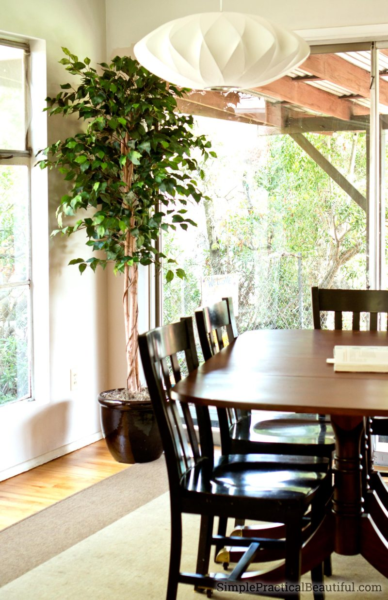 Silk tree for home decor in a dining room with windows