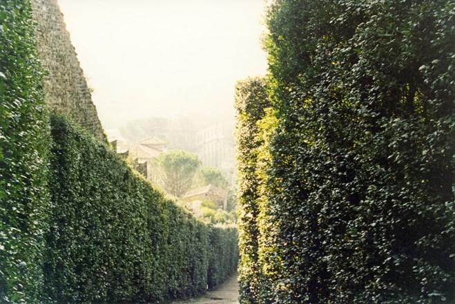 Boboli Gardens Hedge