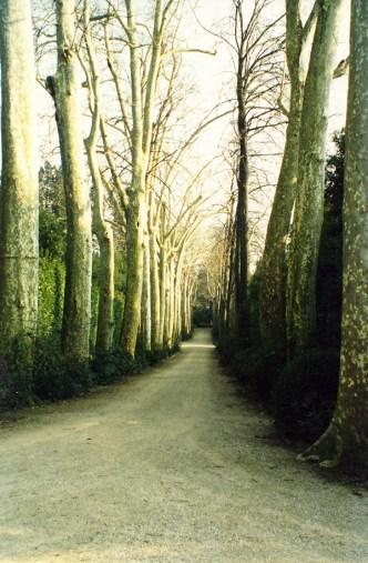 Boboli Gardens Tree Lane
