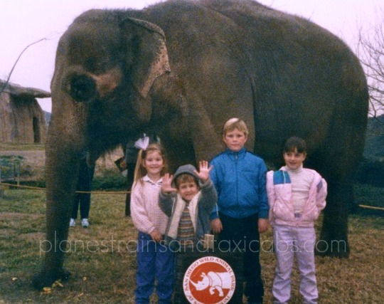 San Diego Safari Park Elephant up close 1985 | Simple Sojourns