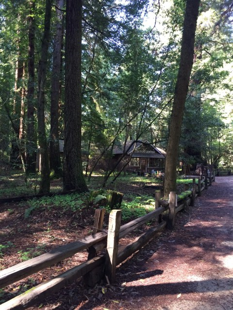 Henry Cowell Redwoods State Park Visitor's Center - Simple Sojourns