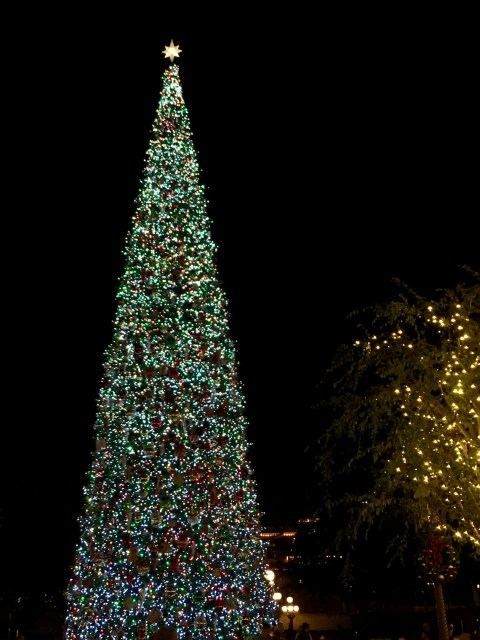 Disneyland Christmas Tree - Simple Sojourns