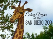 Eating Vegan at the San Diego Zoo