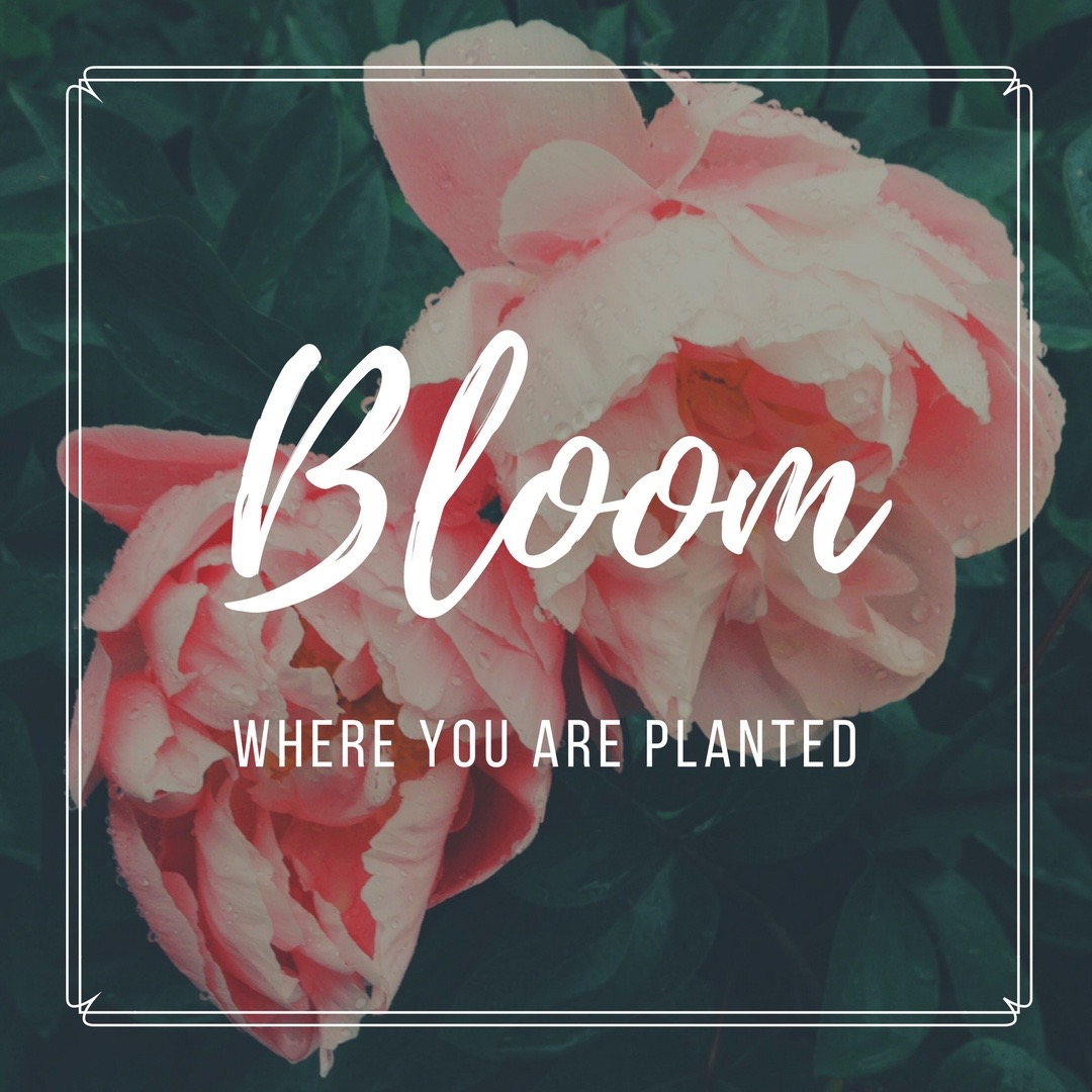 Bloom Where You Are Planted - Simple Sojourns