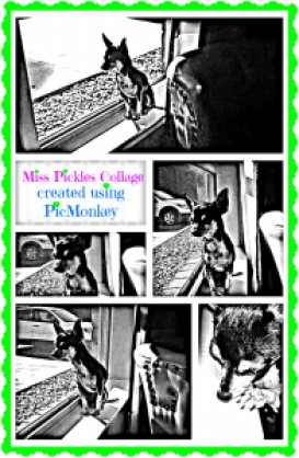 PicMonkey Miss Pickles Collage