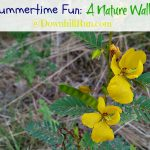 Summertime Fun – A Nature Walk