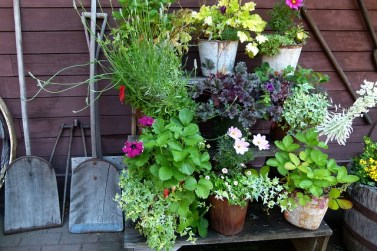 How to Organize a Fabulous Garden in Your New Home