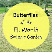 Butterflies at the Ft. Worth Botanic Garden