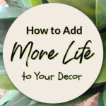 How to Add More Life to Your Decor