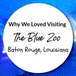 Why We Loved Visiting The Blue Zoo in Baton Rouge, Louisiana