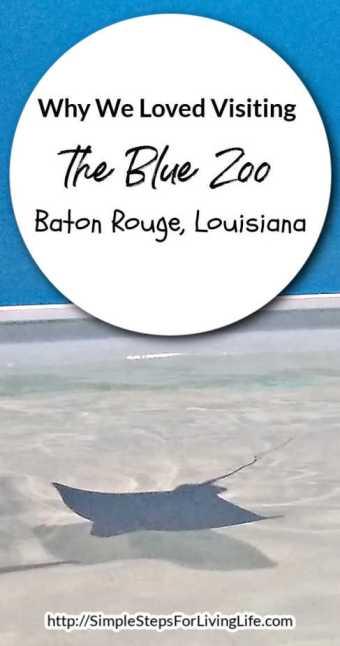 Blue zoo baton rouge