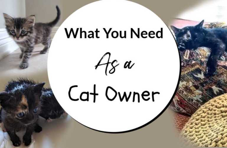 What You Need As a Cat Owner