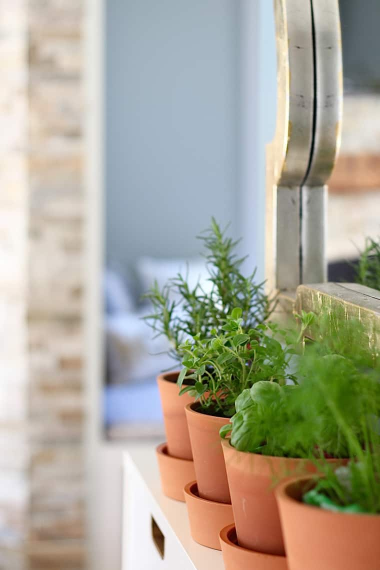 2016 Spring Home Tour herbs