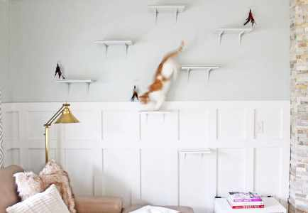How We Keep Our Cat-Friendly House Fresh + Clean Everyday