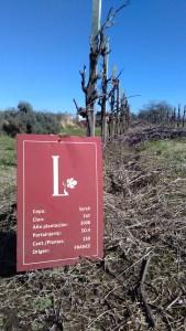 El Legado vinho