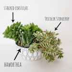 How To Plant A Succulent Container Garden In A Bowl
