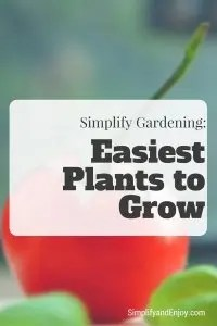 Easiest Plants to Grow Simplify and Enjoy