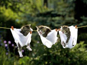 pisici pudice
