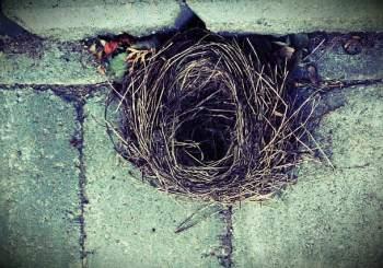 pixabay nest