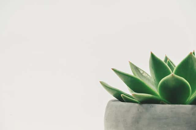 succulent, white space