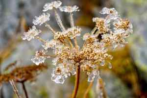 seed in winter