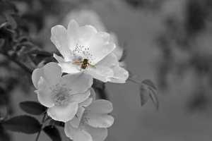 food chain pollinator