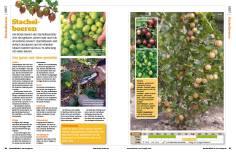 Gartentipp: Stachelbeeren