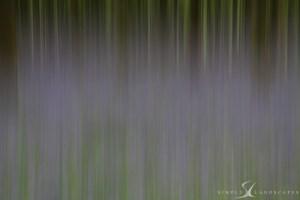 Bluebells - blur - abstract