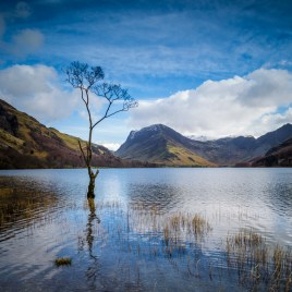 Buttermere Tree - martin steele