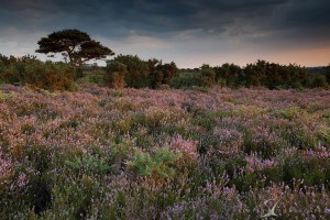 Bratley View Sunset new forest