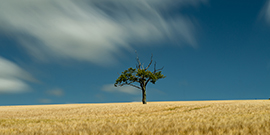 Lone Tree photos