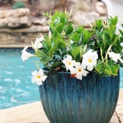 summer pool decor