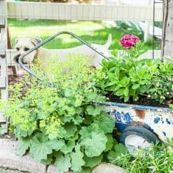 summer budget landscaping ideas