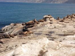 Sea lions abound