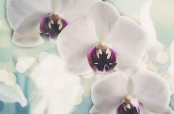 orchids-1094761