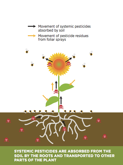 Neonics become part of the infrastructure of the treated plant